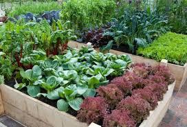 Small Picture Organic Garden Design Home Interior Design