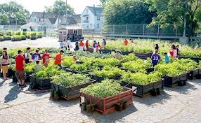 community gardening. Wonderful Gardening Category Community Gardens The Importance Of Urban Gardening And Community Gardening S