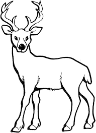 Coloring Pages Of Deer Printable Kids