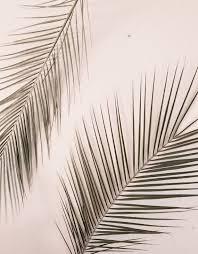 palm tree print palms print california