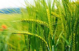 Бизнес план растениеводство Растениеводство Бизнес план растениеводство