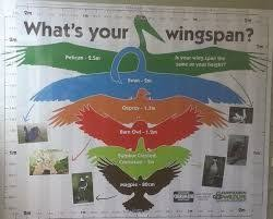 Wingspan Chart Image Result For Owl Wingspan Chart Wing Spans Owl Chart