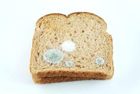 Moldy Toast Toast Embroidery 3 Mold 1 Eating Toasted Moldy Bread