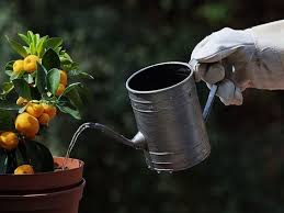 container gardening for vegetables