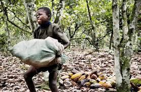 Resultado de imagem para trabalho infantil cacau africa