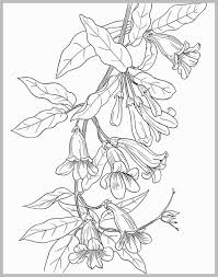 Botany Coloring Book Download Cute Homeschool Nature Study And More