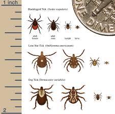 Tick Size Chart Identify Tick Free Nh
