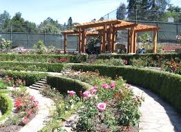 berkeley rose garden the new pergola at the rose garden photo rose garden inn berkeley history
