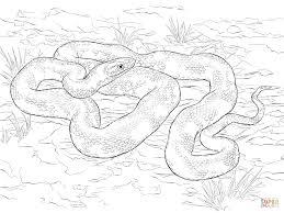 terrific snake coloring page | dokardokarz.net