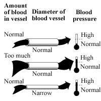 Blood Pressure Diagram The Kidney Urology Foundation Of America