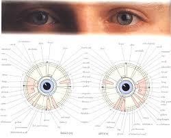 Dr Bernard Jensen Iridology Chart Hhcmi Com Homeopathic Remedies Are Completely Safe For