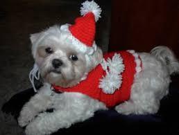 Crochet Dog Hat Pattern Extraordinary GIGET'S Dog SANTA SWEATER AND HAT Free Crochet Pattern Courtesy Of