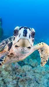 underwater 1080x1920 iPhone ...