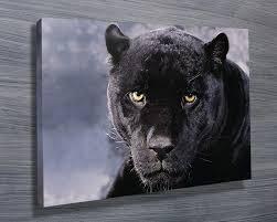 black panther wall art canvas print on black panther animal wall art with black panther stretched canvas print