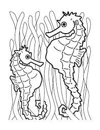 Free Printable Seahorse Coloring Pages For Kids Coloring Pages
