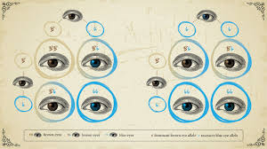 Eye Gene Chart Genotype Vs Phenotype Examples And Definitions Technology