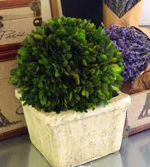 Decorative Boxwood Balls Boxwood Topiary Ball Offers The Joy Of Minimalism And Simplicity 56