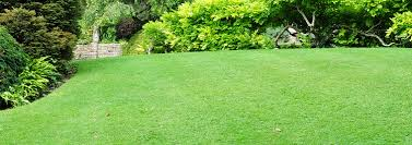 Lawn Care 101 Lawn Maintenance Guides And Tips Trugreen