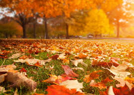 Fall Landscaping Kens Quick Tip Answers Your Fall Lawn Landscape Questions