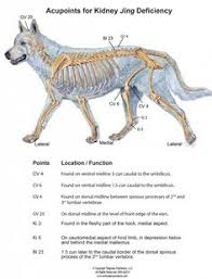 Canine Trigger Point Chart 16 Best Canine Acupressure Images Acupressure Animal