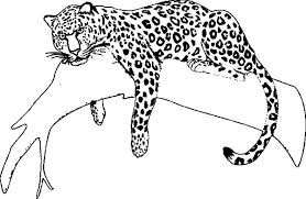 Small Picture Jaguar Sleeping on Tree Coloring Pages Bulk Color