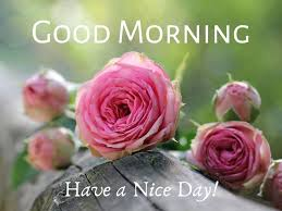 50 good morning wish images with roses