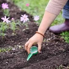 garden seeds vegetable garden garden