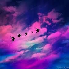 colorful birds flying tumblr. Colorful Birds Flying Tumblr Inside