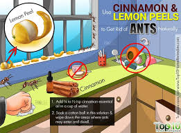 pesticides for ants contain chemicals that are harmful to humans and the environment but there are some natural non toxic ways to control ants