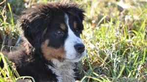 lyme disease hton veterinary
