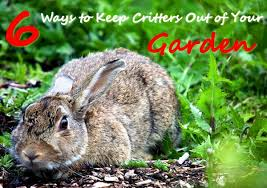 how to keep birds away from garden. 6 Ways To Keep Critters Out Of Your Garden How Birds Away From