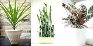 Best indoor plants for office Feng Shui Awesome Office Ideas Astounding Office Plants No Light Design Office Best Indoor Plants For Office Tall Dining Room Table Thelaunchlabco Awesome Office Ideas Astounding Office Plants No Light Design Office