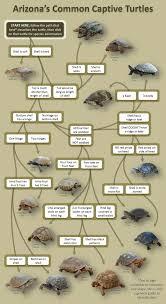 Turtle Id Chart Turtle Red Footed Tortoise Tortoises