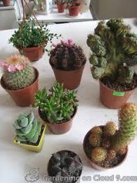 Small Picture Indoor Cactus Garden Cactus Pinterest Cacti Indoor cactus