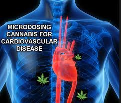 weed and cardiovascular health
