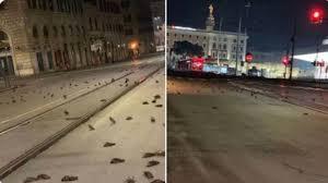 Uccelli morti a Roma per i botti di Capodanno. La denuncia sui social -  Cronaca - quotidiano.net