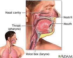 laryngoscopy.