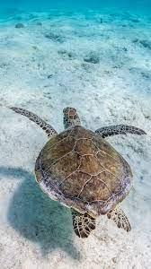 Turtle, underwater, sea, clear water ...