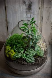 Terrarium by me with galaxy aralia, aluminum pilea and baby's tears. black  lava rock