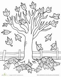 fall coloring sheet maple tree coloring page worksheets kindergarten and coloring pages