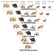 Dog Scientific Classification Chart 18 Judicious Dog Taxonomy Chart