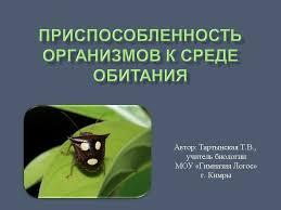 Урок лекция по теме Приспособленность организмов к среде обитания  Презентация к уроку