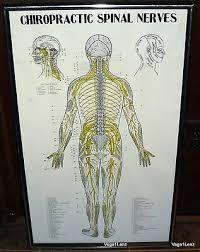 Autonomic Nervous System Neuropatholator Chiropractic Charts