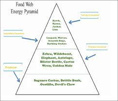 food web pyramid food web energy pyramid kalahari desert