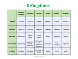 6 Kingdoms Chart By Drh Biology