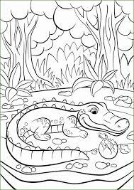 3 Baby Crocodile Kleurplaten 56311 Kayra Examples