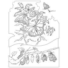 Small Picture Rattlesnake Coloring Page 17 Printable Coloring Pages For Kids