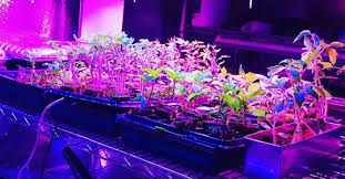 Lighting for houseplants Diy Growing Plants Indoors With Artificial Light An Ultimate Guide For Beginners Urban Organic Yield Using Artificial Grow Lights For Indoor Plants How To Get Started