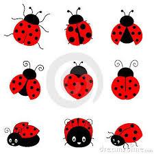 ladybird drawing