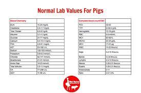 Mini Pig Health The Basics Mini Pig Info